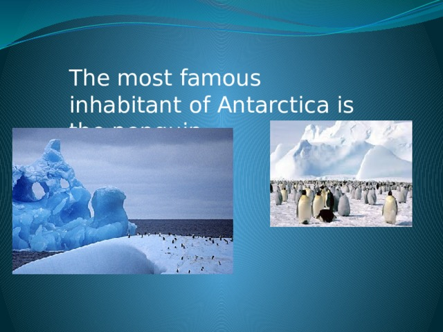 The most famous inhabitant of Antarctica is the penguin.