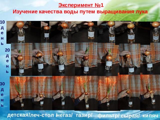 Эксперимент № 1 Изучение качества воды путем выращивания лука 10 д е н ь 20 д е н ь 30 д е н ь детская/  негаз/  леч-стол / газир/ фильтр/ кипяч сырая/