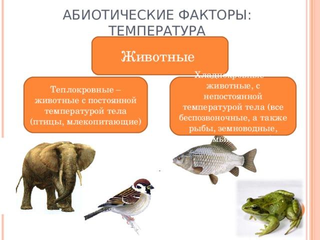 АБИОТИЧЕСКИЕ ФАКТОРЫ: ТЕМПЕРАТУРА Животные Теплокровные – животные с постоянной температурой тела (птицы, млекопитающие) Хладнокровные – животные, с непостоянной температурой тела (все беспозвоночные, а также рыбы, земноводные, пресмыкающиеся)