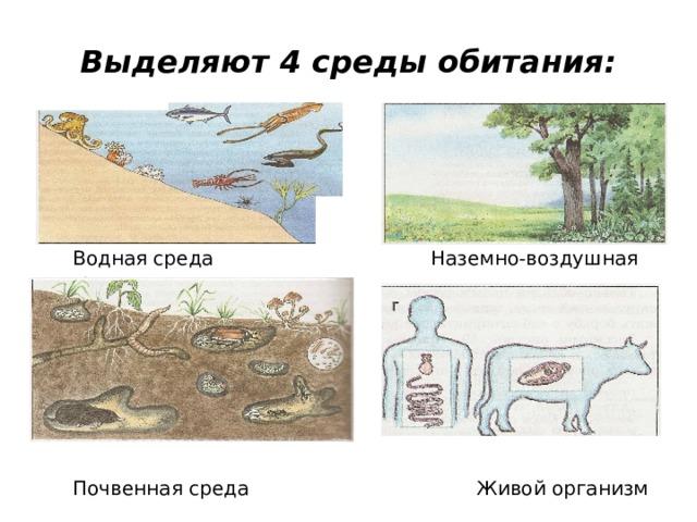 Выделяют 4 среды обитания:  Водная среда  Наземно-воздушная среда  Почвенная среда Живой организм