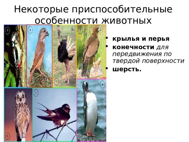 Некоторые приспособительные особенности животных крылья и перья конечности  для передвижения по твердой поверхности шерсть.