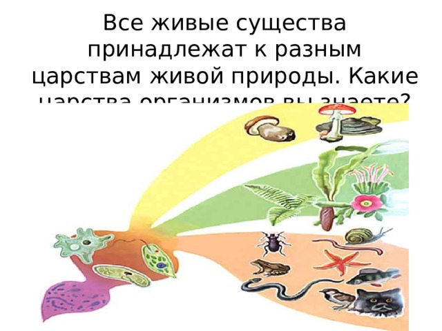 Все живые существа принадлежат к разным царствам живой природы. Какие царства организмов вы знаете?