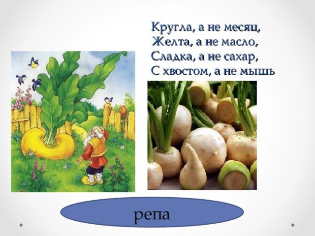 Кругла, а не месяц,  Желта, а не масло,  Сладка, а не сахар,  С хвостом, а не мышь репа
