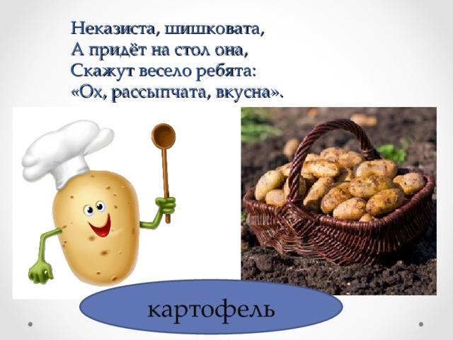 Неказиста, шишковата,  А придёт на стол она,  Скажут весело ребята:  «Ох, рассыпчата, вкусна». картофель