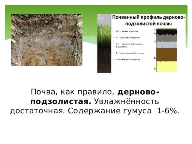Почва, как правило, дерново-подзолистая. Увлажнённость достаточная. Содержание гумуса 1-6%.