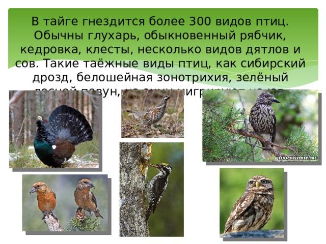 В тайге гнездится более 300 видов птиц. Обычны глухарь, обыкновенный рябчик, кедровка, клесты, несколько видов дятлов и сов. Такие таёжные виды птиц, как сибирский дрозд, белошейная зонотрихия, зелёный лесной певун, на зиму мигрируют на юг.