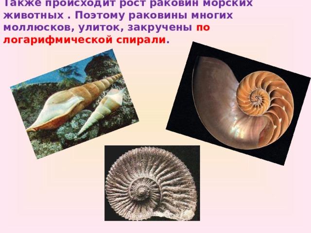 Также происходит рост раковин морских животных . Поэтому раковины многих моллюсков, улиток, закручены по логарифмической спирали .