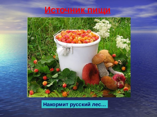 Источник пищи Накормит русский лес…