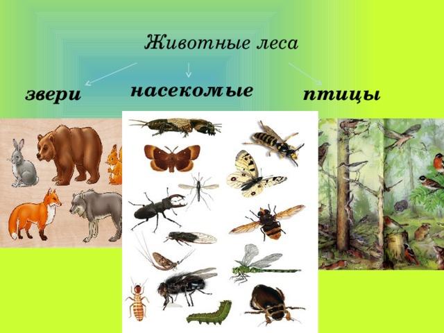 Животные леса насекомые звери птицы