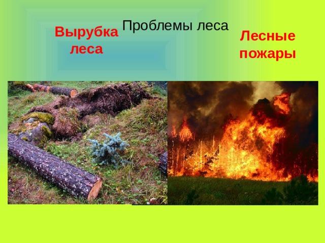 Проблемы леса Вырубка леса Лесные пожары