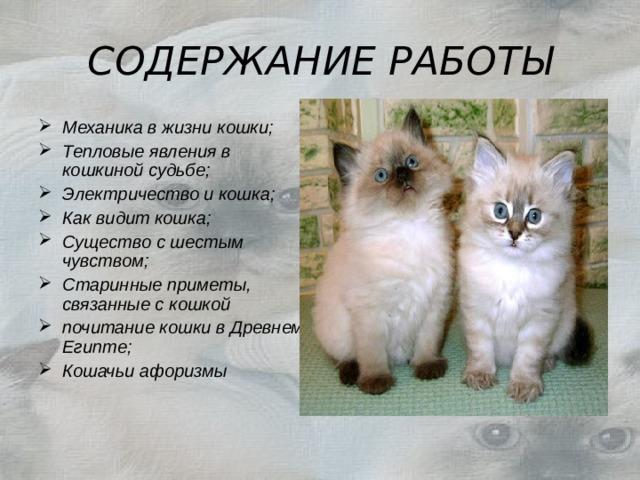 фея физика и кошка картинки радио, реклама прессе