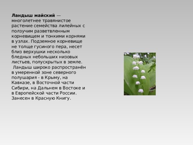 Ландыш майский — многолетнее травянистое растение семейства лилейных с ползучим разветвленным корневищем и тонкими корнями в узлах. Подземное корневище не толще гусиного пера, несет близ верхушки несколько бледных небольших низовых листьев, полускрытых в земле. Ландыш широко распространён в умеренной зоне северного полушария - в Крыму, на Кавказе, в Восточной части Сибири, на Дальнем в Востоке и в Европейской части России.  Занесен в Красную Книгу.
