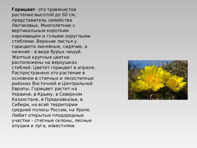 Горицвет - это травянистое растение высотой до 60 см, представитель семейства Лютиковых. Многолетник с вертикальным коротким корневищем и голыми округлыми стеблями. Верхние листья у горицвета линейные, сидячие, а нижние - в виде бурых чешуй. Желтые крупные цветки расположены на верхушках стеблей. Цветет горицвет в апреле. Распространено это растение в основном в степных и лесостепных районах Восточной и Центральной Европы. Горицвет растет на Украине, в Крыму, в Северном Казахстане, в Предкавказье, в Сибири, на всей территории средней полосы России, на Урале. Любит открытые плодородные участки - степные склоны, лесные опушки и луга, известняки.