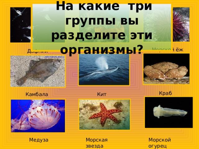 На какие три группы вы разделите эти организмы? Морской ёж Актиния Дафнии Краб Камбала Кит Медуза Морская звезда Морской огурец