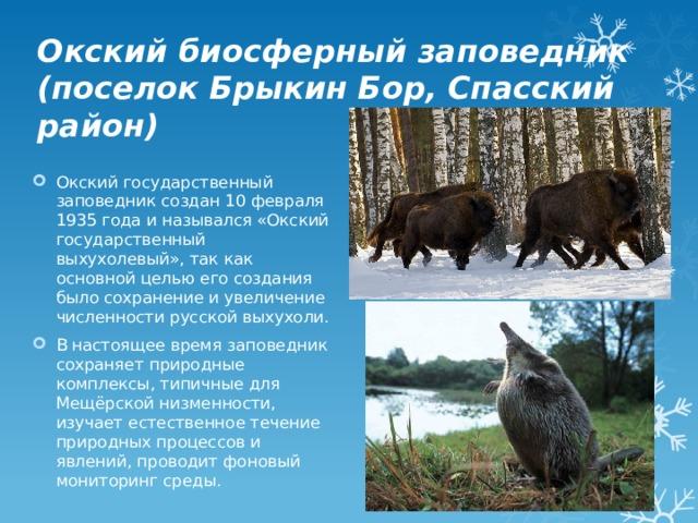 Окский биосферный заповедник (поселок Брыкин Бор, Спасский район)