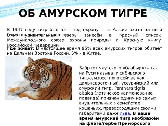 ОБ АМУРСКОМ ТИГРЕ   В 1947 году тигр был взят под охрану — в России охота на него была полностью запрещена. Этот удивительный зверь занесён в Красный список Международного союза охраны природы и Красную книгу Российской Федерации Где живет: В настоящее время 95% всех амурских тигров обитает на Дальнем Востоке России. 5% – в Китае. Бабр (от якутского «баабыр») – так на Руси называли сибирского тигра, известного сейчас как дальневосточный, уссурийский или амурский тигр. Panthera tigris altaica (латинское наименование подвида) признан одним из самых внушительных в семействе кошачьих, превосходящим своими габаритами даже льва . В наше время амурский тигр изображён на флаге/гербе Приморского края и гербе Хабаровска.