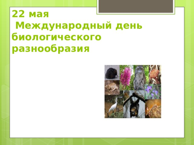 22 мая  Международный день  биологического разнообразия