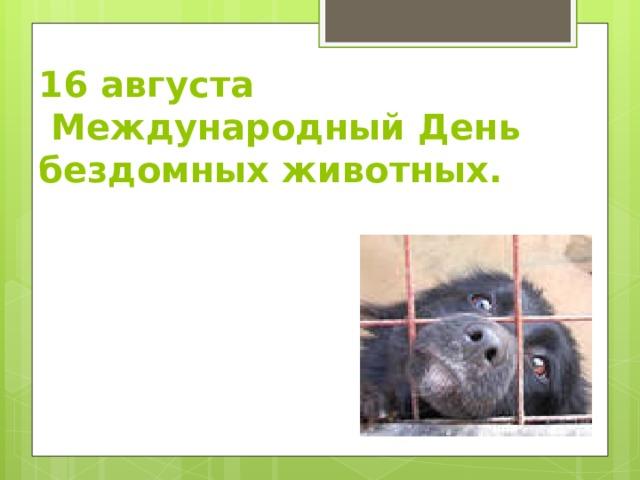 16 августа  Международный День  бездомных животных.