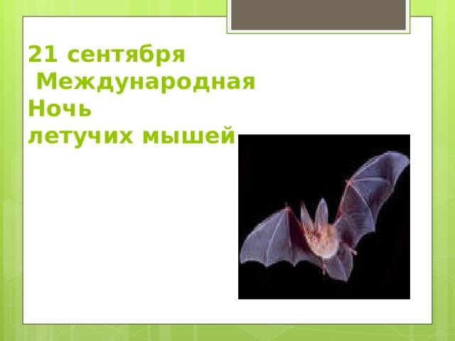 21 сентября  Международная Ночь  летучих мышей.