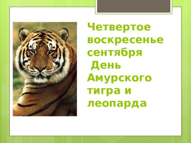 Четвертое воскресенье сентября  День Амурского тигра и леопарда
