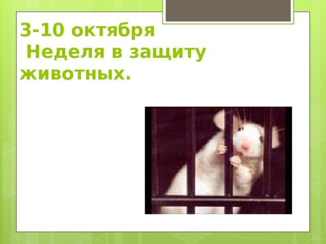 3-10 октября  Неделя в защиту животных.