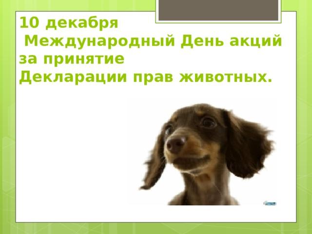 10 декабря  Международный День акций за принятие  Декларации прав животных.
