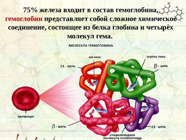 75% железа входит в состав гемоглобина, гемоглобин представляет собой сложное химическое соединение, состоящее из белка глобина и четырёх молекул гема.