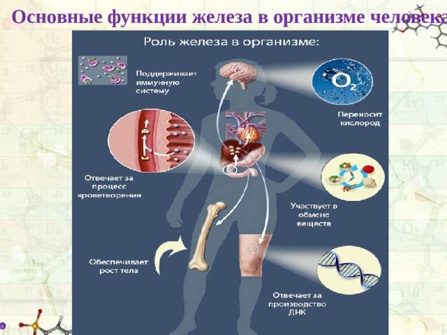 Основные функции железа в организме человека