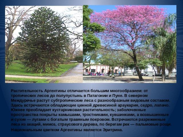Растительность Аргентины отличается большим многообразием: от тропических лесов до полупустынь в Патагонии и Пуне. В северном Междуречье растут субтропические леса с разнообразным видовым составом. Здесь встречаются обладающие ценной древесиной араукария, седро, лапачо. Южнее преобладает кустарниковая растительность; заболоченные пространства покрыты камышами, тростниками, кувшинками, а возвышенные и сухие— лугами с богатым травяным покровом. Встречаются разреженные леса из акаций, мимоз, страусового дерева, по берегам рек— пальмовые рощи. Национальным цветком Аргентины является Эритрина.