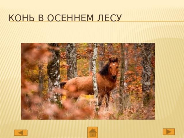 Конь в осеннем лесу
