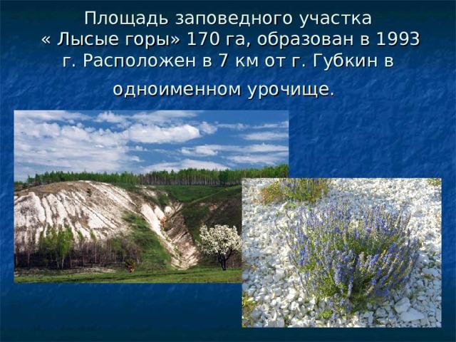 Площадь заповедного участка  « Лысые горы» 170 га, образован в 1993 г. Расположен в 7 км от г.Губкин в одноименном урочище .