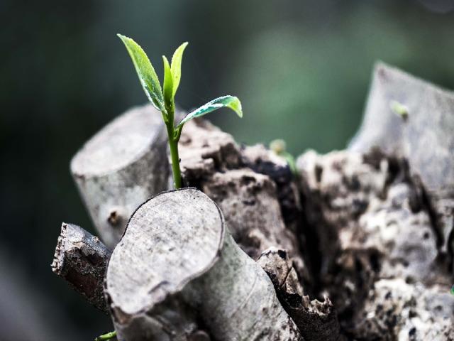 Вы все изучаетев школебиологию и знаете, что дерево не может прожить не имея корней.Вот и мы с вамикакдеревья, которые растут сейчас вXXIвеке, но из-за той части истории, о которой мы узнаем сегодня, наши корнибылиобрублены. Наша с вами задача сегодняза эти 20 минут через узнавание нашей истории восстановить хотя бы маленькие корешки,пуститьновые ростки.