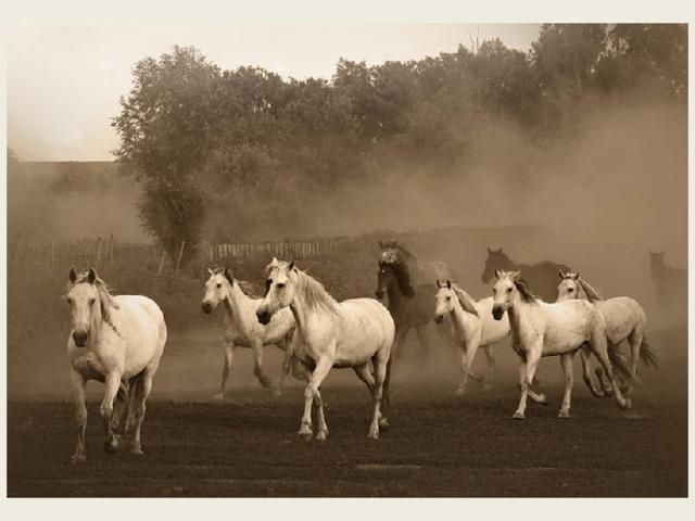При усадьбебыл основан конный завод, на котором выращивали орловских рысаков: в разные годы здесь содержалось от 80 до 150 голов лошадей.