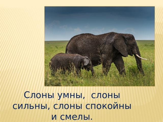 Слоны умны, слоны сильны, слоны спокойны и смелы.