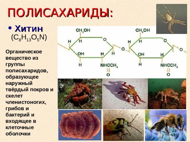 ПОЛИСАХАРИДЫ: Хитин (C 8 H 13 O 5 N) Органическое вещество из группы полисахаридов, образующее наружный твёрдый покров и скелет членистоногих, грибов и бактерий и входящее в клеточные оболочки
