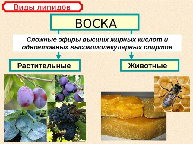 Виды липидов ВОСКА Сложные эфиры высших жирных кислот и одноатомных высокомолекулярных спиртов Растительные  Животные