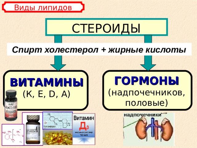 Виды липидов СТЕРОИДЫ Спирт холестерол + жирные кислоты ГОРМОНЫ  (надпочечников, половые) ВИТАМИНЫ  (К, E , D , А)