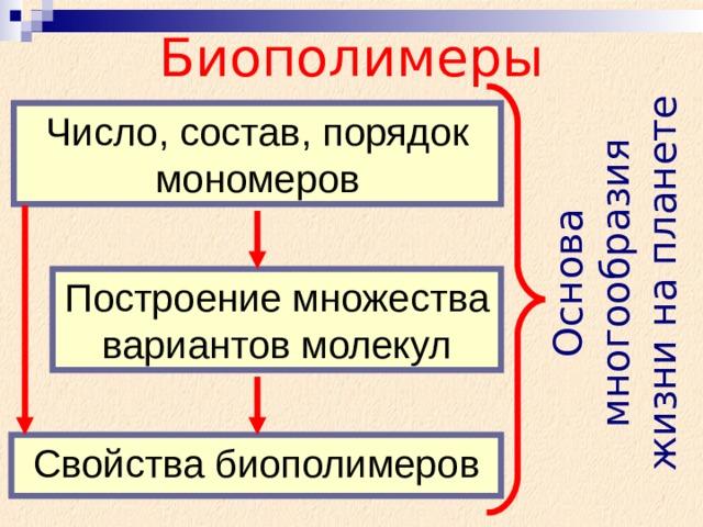 Основа многообразия жизни на планете Биополимеры Число, состав, порядок мономеров Построение множества вариантов молекул Свойства биополимеров
