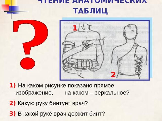 ЧТЕНИЕ АНАТОМИЧЕСКИХ ТАБЛИЦ  1 2 1)  На каком рисунке показано прямое изображение, на каком – зеркальное? 2)  Какую руку бинтует врач? 3)  В какой руке врач держит бинт?