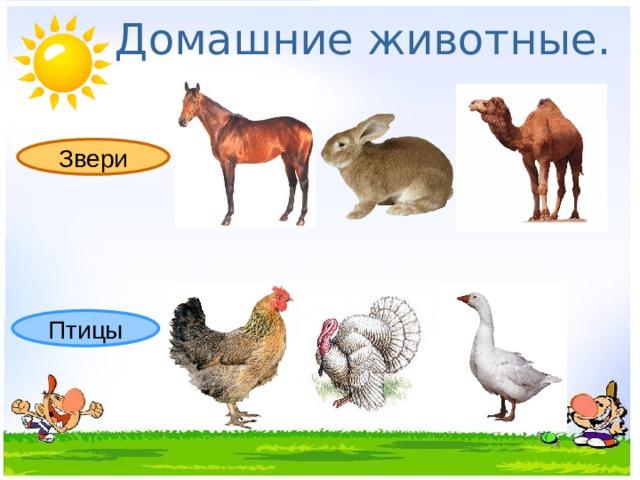 Домашние животные. Звери Птицы