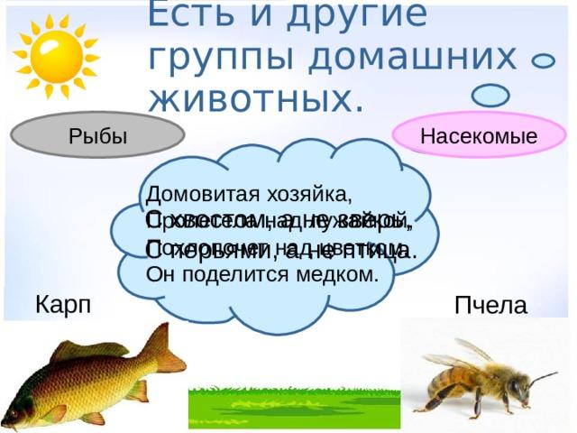 Есть и другие группы домашних животных. Насекомые Рыбы Домовитая хозяйка, Пролетела над лужайкой, Похлопочет над цветком, Он поделится медком. С хвостом, а не зверь, С перьями, а не птица. Карп Пчела
