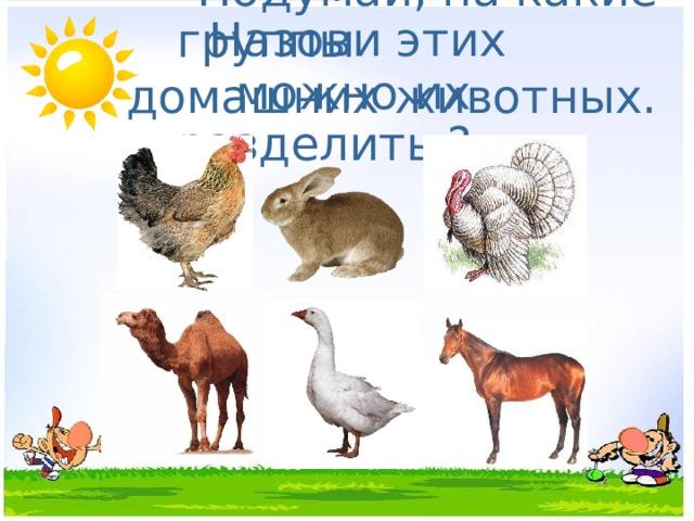 Назови этих домашних животных.  Подумай, на какие группы  можно их разделить ?