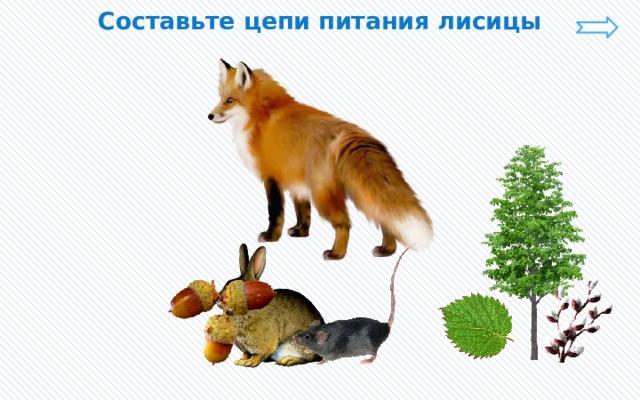 Составьте цепи питания лисицы