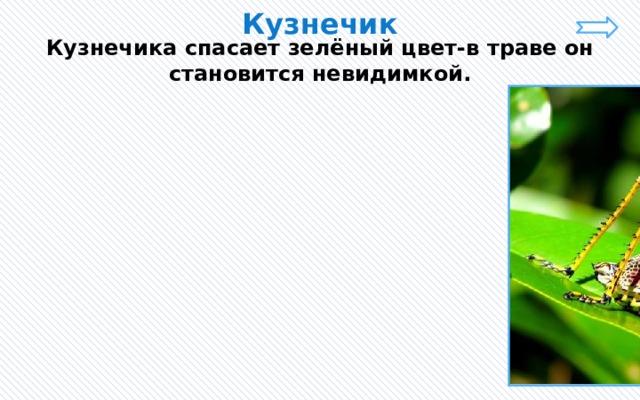 Кузнечик Кузнечика спасает зелёный цвет-в траве он становится невидимкой.