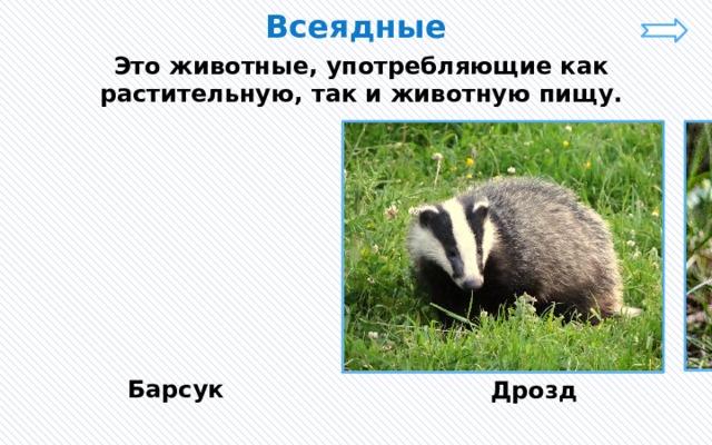 Всеядные Это животные, употребляющие как растительную, так и животную пищу. Барсук Дрозд