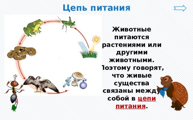 Цепь питания Животные питаются растениями или другими животными. Поэтому говорят, что живые существа связаны между собой в цепи питания .