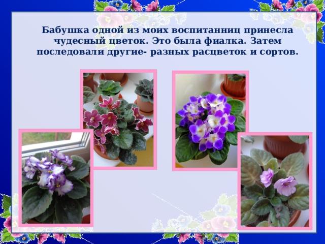 Бабушка одной из моих воспитанниц принесла чудесный цветок. Это была фиалка. Затем последовали другие- разных расцветок и сортов.