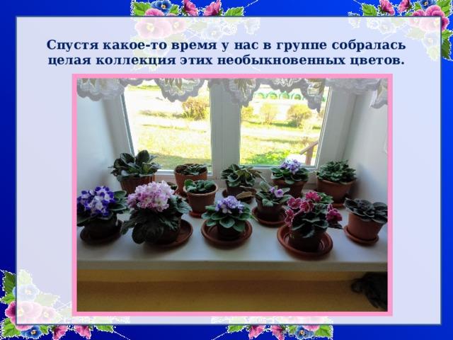 Спустя какое-то время у нас в группе собралась целая коллекция этих необыкновенных цветов.