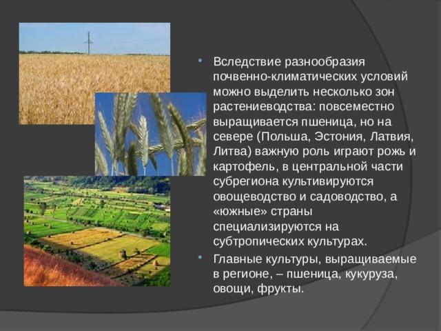 Вследствие разнообразия почвенно-климатических условий можно выделить несколько зон растениеводства: повсеместно выращивается пшеница, но на севере (Польша, Эстония, Латвия, Литва) важную роль играют рожь и картофель, в центральной части субрегиона культивируются овощеводство и садоводство, а «южные» страны специализируются на субтропических культурах. Главные культуры, выращиваемые в регионе, – пшеница, кукуруза, овощи, фрукты.