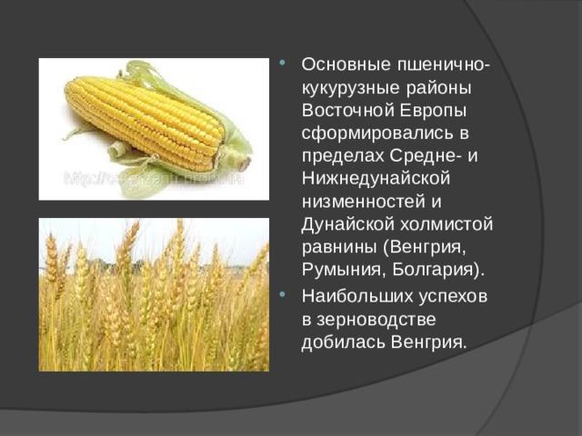 Основные пшенично-кукурузные районы Восточной Европы сформировались в пределах Средне- и Нижнедунайской низменностей и Дунайской холмистой равнины (Венгрия, Румыния, Болгария). Наибольших успехов в зерноводстве добилась Венгрия.